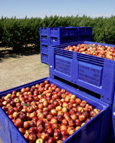 AgriLog at Fruites Caberol in Spain: a successful summer campaign
